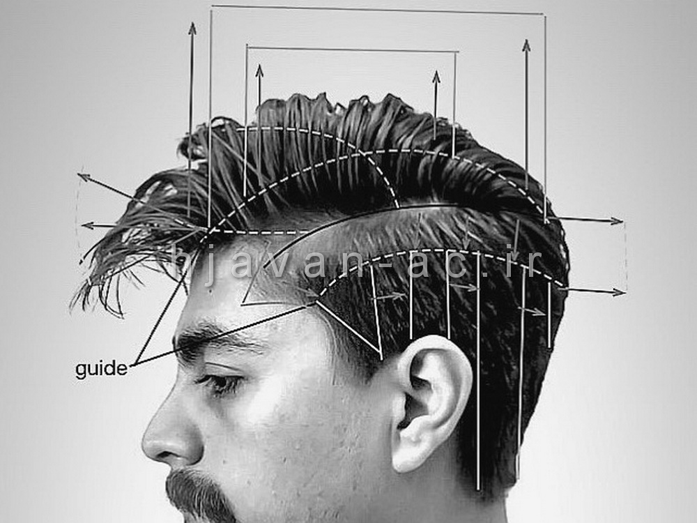 شناخت آناتومی و تقسیم بندی سر